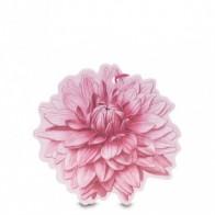 Mirisni cvijet s višestrukom namjenom Sfumature di Dalia
